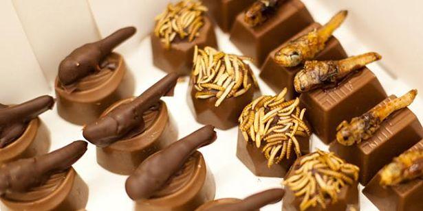 Chocolats aux insectes