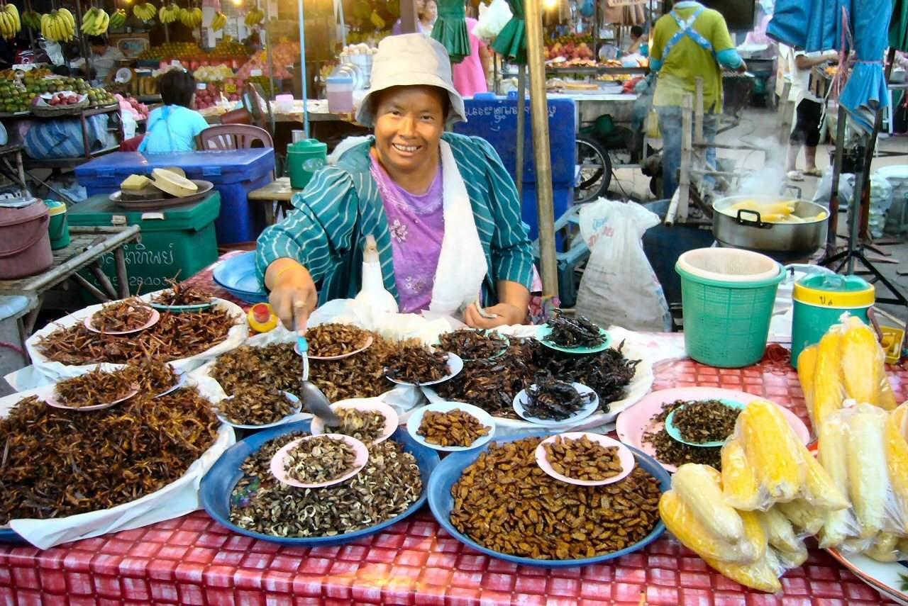 insectes-thailandes
