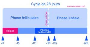 cycle menstruel femme et musculation